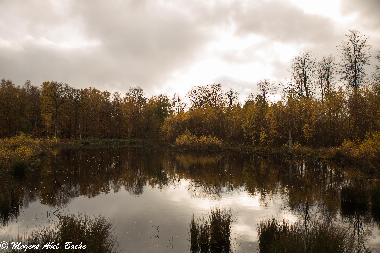 Hareskoven i efterårsdragt