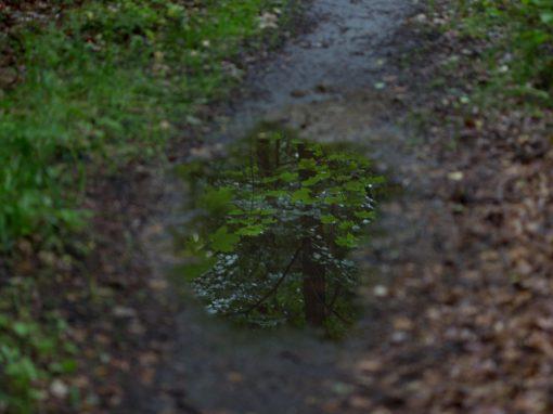 Efter regnen